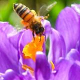 Inden længe rammes Danmark af pollensæsonen.