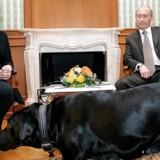 Ruslands præsident Vladimir Putin sammen med kansler Angela Merkel og Putins hund, Koni, under et møde i 2007. Merkel er kendt for at være angst for hunde, men den russiske præsident fortæller nu, at han ikke havde Koni med for at intimidere Merkel.