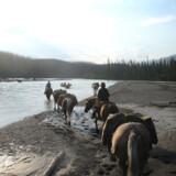 Skovgrænsen og det mildere klima ved Gataga-floden.