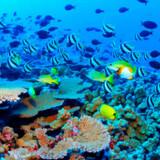 Koralrevet ud for Cairns er verdensberømt - og med god grund. Men du kan også opleve regnskov, spille golf, komme tæt på krokodiller og meget andet i området omkring byen.