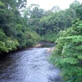 Virunga National park ligger mellem Virunga og Rwenzori bjergene i den østlige del af Den Demokratiske Republik Congo