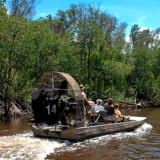 Der er tonsvis af tilbud om at se Floridas farligste indbygger, alligatoren.