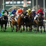 26. marts løber verdens mest prestigefylde hestevæddeløb, Dubai World Cup, af stablen.