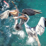 The Keys' er verdensklassefiskeri, snorkling, dykning, dejlige strande og afslappet stemning.