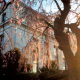 Hotel State Plaza er specielt, når kirsebærtræerne springer ud om foråret, voldsomt populært.