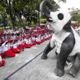 Det krævede et større malerarbejde at klæde elefanterne ud i panda-forklædning inden protestmarchen mod pandaens popularitet.