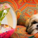 Her er hunde velkomme - og også andre kæledyr i øvrigt.