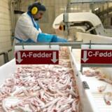 Danpo får travlt med at levere hønsefødder og hønsevinger til sydkoreanerne.