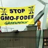40 aktivister fra miljøorganisationen Greenpeace besætter en de to kraner på Århus havn 23.1.2000, for at forhindre lodsningen af gensplejset foder. Foto: Ernst van Norde