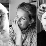 Ghita Nørby kan søndag fejre sin 80 års fødselsdag med en mere end 60 år lang og succesfuld karriere. I anledning af den runde fødselsdag, har Berlingske samlet en billedserie af hendes liv og karriere. Klik med her.Læs også vores portræt af skuespillerinden »Ghita forever«