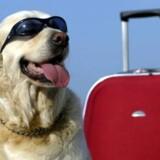Familiens firbenede medlem skal også have en god ferierejse. På Pet Airways slipper han for at flyve i lastrummet eller blive afvist fra kabinen, fordi han er for stor eller har dårlig ånde.
