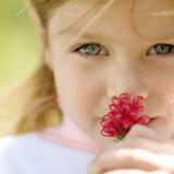 Undersøgelsen viser, at vi er i stand til at genkalde sig dufte ved at se på billeder
