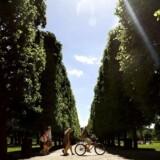 Vejrbillede, torsdag d. 3. juni - 2010. Kongens Have, København.