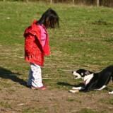 Hunden er menneskets bedste ven, siges det, men det logrende kæledyr kan også hjælpe børn til at lære vigtige sociale egenskaber. Free/Colourbox