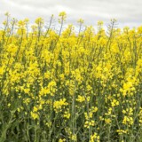 Nye miljøplaner vil udradere milliardværdier i landbruget