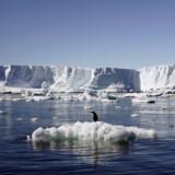 Den smeltende havis på Antarktis har direkte betydning på de danske have. Når isen smelter, stiger havene. Staff/Reuters