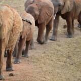 De nominede til årets Oscaruddeling kan være heldige at se elefanter, hvis de benytter den rejse til Tanzania, der er en del af deres goodiebag.