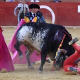 Den liggende 29-årige matador Víctor Barrio døde af sine kvæstelser efter lørdag at være blevet overrumplet af den 529 kilo tunge tyr Lorenzo i i tyrefægterarenaen i den spanske by Teruel. Foto: Antonio Garcia/EPA