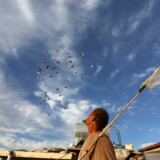 epaselect epa05664479 A man looks after his pigeons on a rooftop in Herat, Afghanistan, 07 December 2016. Among many of the things banned by the Taliban, before they were forcibly removed from power, was bird keeping, which they described as un-Islamic. EPA/JALIL REZAYEE
