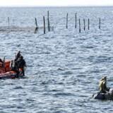 Politiet eftersøger stadig resterne af Kim Wall. De får hjælp af svenske sporhunde, som har markeret flere steder i vandet. Arkivfoto.