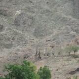 Amerikanske styrker har dræbt Islamisk Stat-lederen Jawad Khan i provinsen Nangahar i Afghanistan. EPA/GHULAMULLAH HABIBI