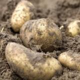 Luxembourg har vundet en længerevarende retssag mod en grundejer i den centrale region Bissen, som nægtede at sælge et lille stykke landbrugsjord, der blev brugt til at dyrke kartofler.