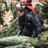 Hasse Holst sælger juletræer på Tove Ditlevsens Plads på Vesterbro. Her bor mange jyder, og de vil ofte have svar på, hvordan et juletræ kan koste 200 kroner pr. meter.