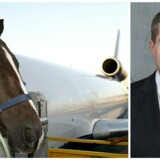 I et interview med Ekstra Bladet bekræfter Johannes Langkilde, at familiens hest er blevet transporteret på tværs af Atlanterhavet, men hvem der har afholdt udgifterne, ønsker han ikke svare på.