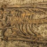Det meget velbevarede skelet er et af 20 skeletter, der er fundet under udgravning af gammel kirkegård fra 1000 års tallet på Rådhuspladsen. Kirkegården kom for dagen i forbindelse med nedlægning af nye fjernvarmerør.