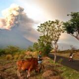 Det aktuelle udbrud i den store vulkan Agung på den indonesiske ferieø Bali er ikke stort nok til at kunne nedkøle klimaet. Men det kan komme.