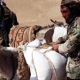 Islamisk Stat har i en tilsyneladende hævn bortført og dræbt 30 hyrder og børn i Afghanistan. (arkivfoto) Scanpix/Jean-claude Chapon