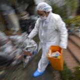 En arbejder i beskyttelsesdragt rydder op på det katastroferamte Fukushima-atomkraftværk i Japan.