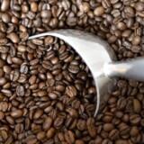 Drik du bare mere kaffe. To nye studier viser, at den populære, sorte væske forlænger livet.
