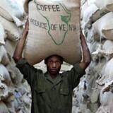 I fem år har Peter Larsen Kaffe haft udviklingsprojekter i Kenya. Nu vil firmaet også uddanne kaffebønder i lande som Tanzania og Colombia. Foto: Peter Larsen Kaffe