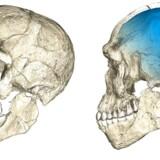 Rekonstruktioner af kraniet af det 315.000 år gamle marokkomenneske, der hæves at være af vores egen art, Homo sapiens. I givet fald skriver det historien om vores direkte forfædre over 100.000 år længere tilbage i tiden end ellers antaget. Kraniet er dog lidt mere aflangt og med lidt mindre volumen til hjernen end hos nutidige mennesker.