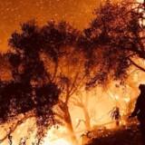 Ilden nærmer sig huse i byen Carpinteria i Californien søndag morgen. Det er uklart, hvor mange huse der er brændt ned. Foreløbig har brandene indirekte kostet et enkelt menneskeliv, da en kvinde døde i en ulykke på vej væk fra det berørte område. Reuters/Handout