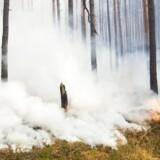 Skovbrand nær Potsdam, Østtyskland. Sommeren er usædvanligt varm og tør over store dele af den nordlige halvkugle, og talrige skovbrande har ramt Nordeuropa og Grækenland de seneste måneder.