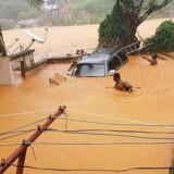 Mindst 312 frygtes døde i Sierra Leone efter voldsomme regnskyl og mudderskred. Her er det en oversvømmet gade i Regent nær hovedstaden Freetown.