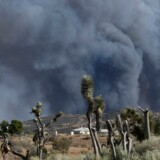 Brandvæsnet har været i gang i flere dage for at få has på flammerne i en kæmpe skovbrand nord for Los Angeles. Nu begynder brandfolkene at få kontrol med branden, men mange huse er brændt. Reuters/Gene Blevins