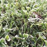 Mandag bliver den flotteste dag i en kold uge, hvor temperaturen topper på omkring fem grader.