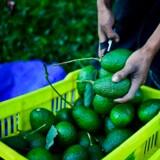 Avocado er en af råvarerne med anti-inflammatoriske egenskaber.