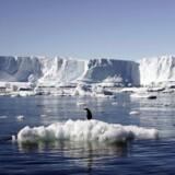 Isbjerg ved Antarktis.