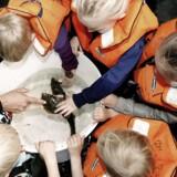 Man må gerne røre fiskene, når Øresundsmiljøskolen holder åbent hus i denne weekend.