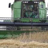 For små overskudslagre af korn presser prisen på dine fødevarer i vejret, konkluderer en dansk analyse. Foto: Henning Bagger