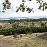 ARKIVFOTO: Med 108 truede arter er Mols Bjerge kommet på en hitliste over statslige arealer med flest dyre-og plantearter.