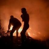 Orkanen Ophelia puster til flammerne i Galicien, hvor myndighederne kæmper med adskillige skovbrande.