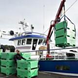 Arkivfoto. Kvotekongerne får svært ved at udvide deres rige med ny fiskeriaftale, siger professor i fiskeriøkonomi.