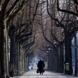 Træerne langs Frederiksberg Allé står i dag i to rækker på hver sin side af selve alleen. Men når der bliver plantet nye træer langs det første stykke af alleen, fra Vesterbrogade til Sankt Thomas Plads, bliver det af pladshensyn kun i en enkelt række.