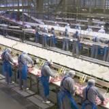118 af 570 arbejdspladser risikerer at forsvinde på en pålægsfabrik i King's Lynn nord for London. Free/Danish Crown/arkiv