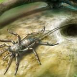 Sådan kunne den skorpionlignende forhistoriske edderkop have set ud, før den for 100 mio. år siden blev indkapslet i harpiks fra et træ i Østasien.